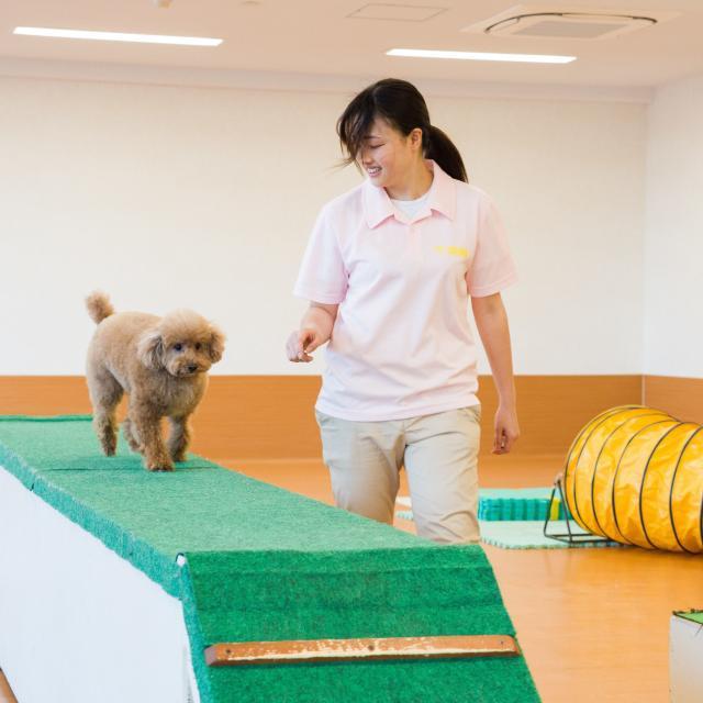 東京スクール・オブ・ビジネス トレーニング体験【小型犬編】2