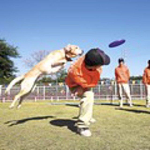 愛知ペット専門学校 特殊犬訓練SP体験&プラスわん体験1