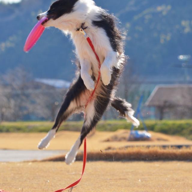 専門学校ちば愛犬動物フラワー学園 3/26(火)オープンキャンパス~スプリングイベント~3