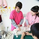 放課後 動物看護師 体験!の詳細