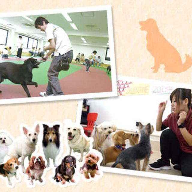 大阪ECO動物海洋専門学校 ドッグトレーナー体験!【家庭犬】1