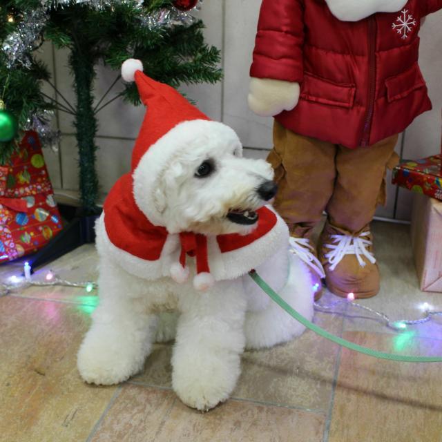 国際動物専門学校 クリスマスイベント1
