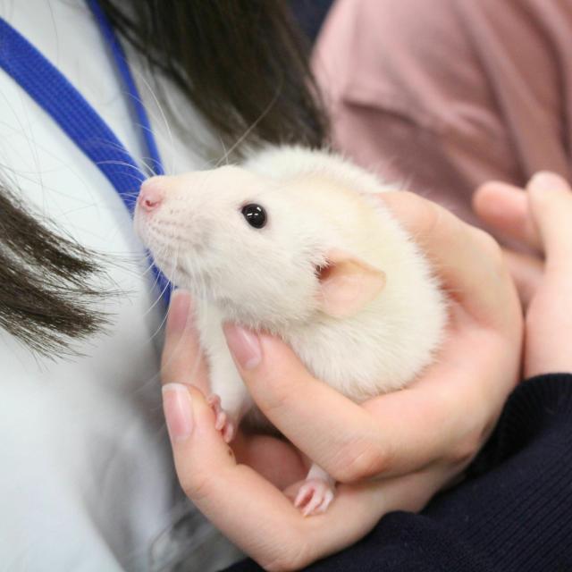 国際動物専門学校 全学科体験3
