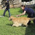 専門学校 福岡ビジョナリーアーツ 【ペット】災害救助犬を育てよう