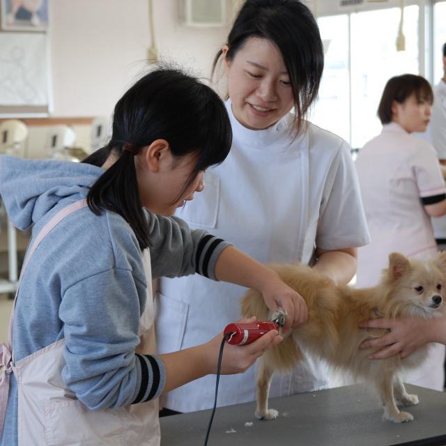 京都動物専門学校 ドッグマッサージでワンちゃんもリラックス4