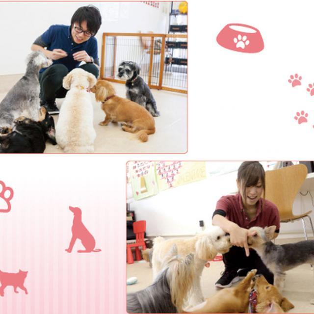 名古屋ECO動物海洋専門学校 【よくばりWAN DAY!!】3