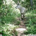 日本自然環境専門学校 哺乳類の調査方法を体験しよう