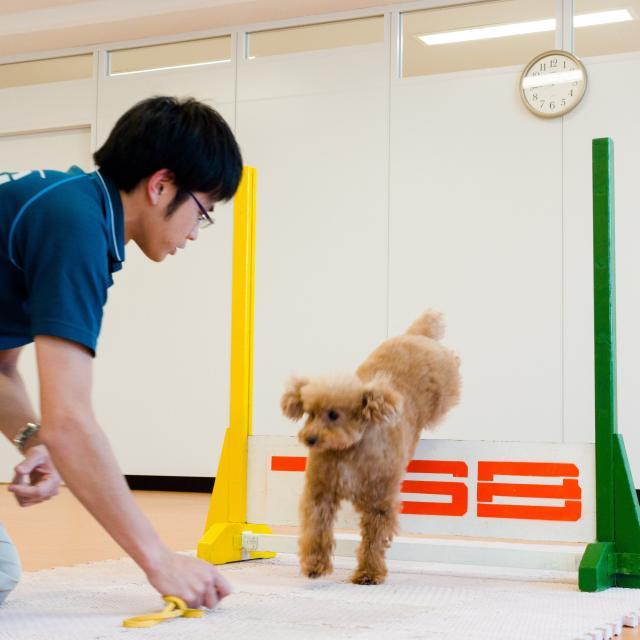 東京スクール・オブ・ビジネス トレーニング体験【小型犬編】1