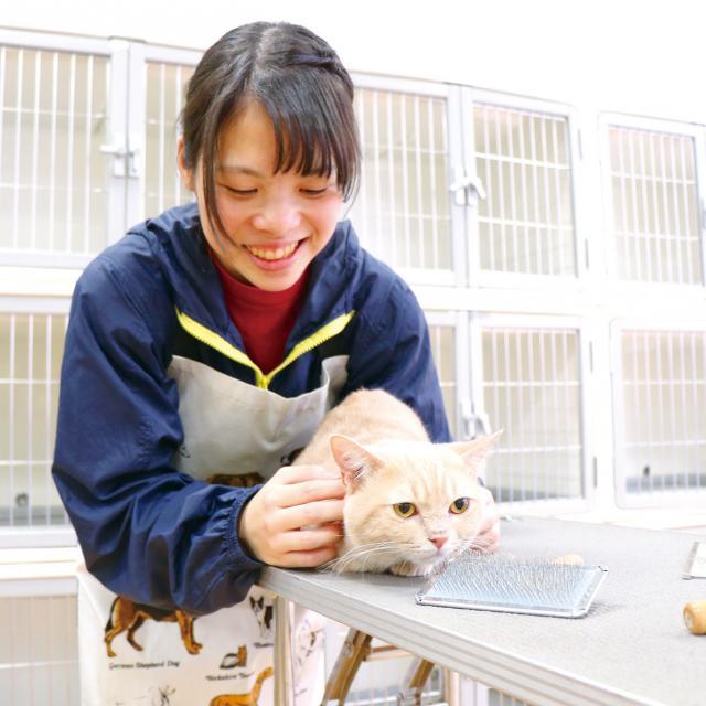 専門学校 九州スクール・オブ・ビジネス 9月体験入学 トリマー/動物看護/ドッグトレーナー3