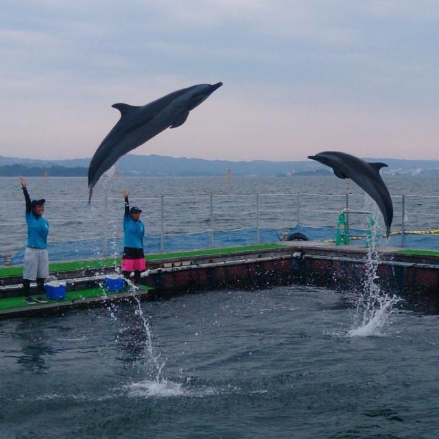 大阪動植物海洋専門学校 トレーナーの秘密を解き明かそう!【水生生物コース】2