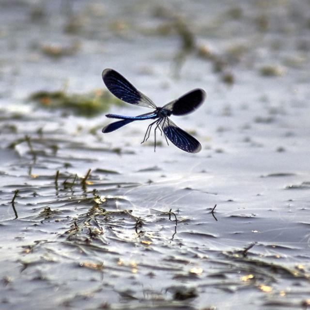 専門学校 東京テクニカルカレッジ 【環境テクノロジー科】水生昆虫を調べて環境調査!1