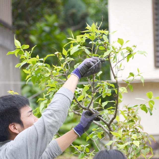 日本ガーデンデザイン専門学校 在校生がエスコート 樹木の剪定2