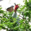 札幌工科専門学校 土曜PMは半日体験入学【造園緑地科】