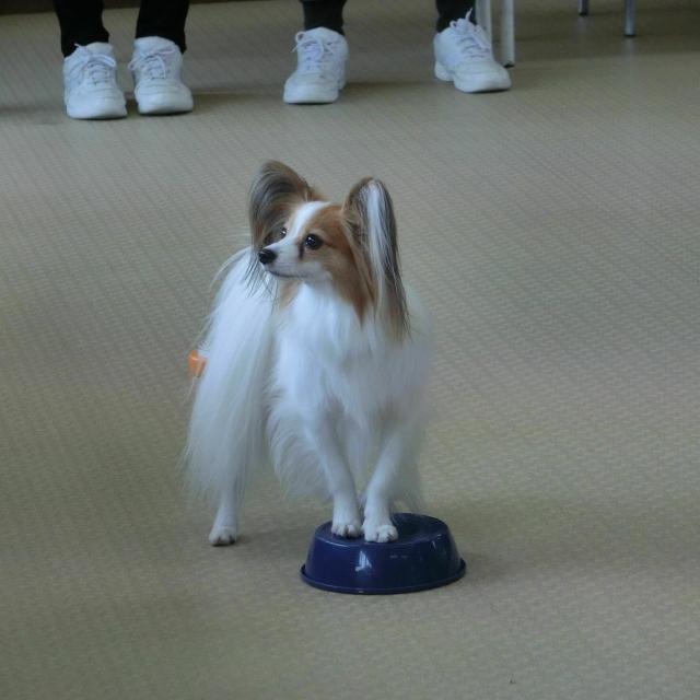 京都動物専門学校 ドッグトレーニング&トリミング体験2