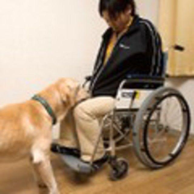 愛知ペット専門学校 特殊犬訓練SP体験&プラスわん体験2