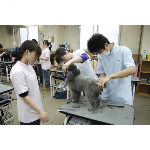 穴吹動物専門学校 体験メニュー豊富!在校生がしっかりサポートするので安心です!2