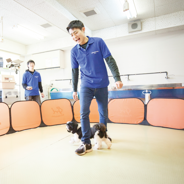 大阪動植物海洋専門学校 アニマルトレーニングに挑戦!【動物飼育コース】2
