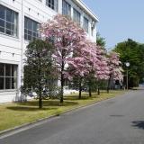 佐野駅・栃木駅からカレッジバス運行 全8フィールドの体験学習の詳細