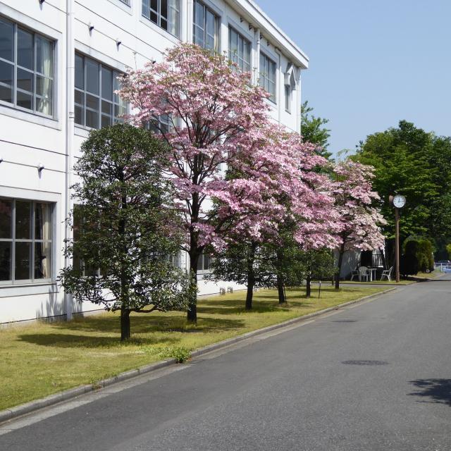 佐野日本大学短期大学 佐野駅・栃木駅からカレッジバス運行 全8フィールドの体験学習1