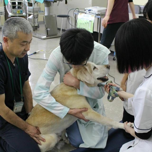 国際動物専門学校 全学科体験1