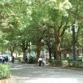 千葉商科大学 6/21(日)オンラインオープンキャンパス