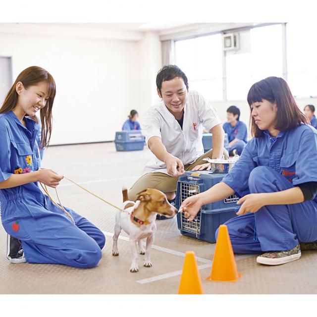 大阪ビジネスカレッジ専門学校 現役ドッグトレーナーに教わる!ワンちゃんのしつけ体験1