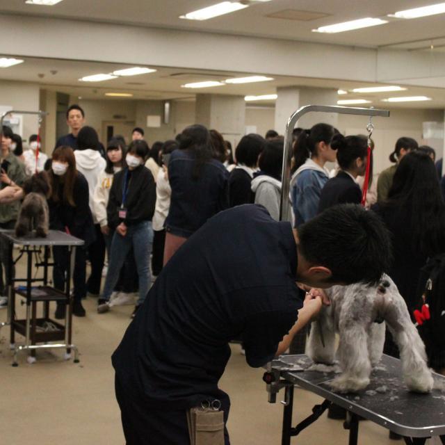中央動物専門学校 H30 体験入学  日程一覧2