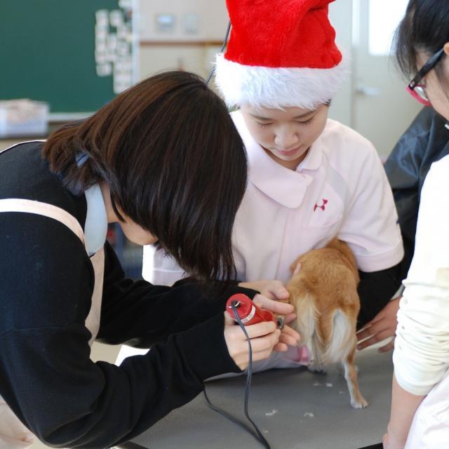 京都動物専門学校 ~Xmasスペシャル~ ハーバリウム作り&トリミング体験!3