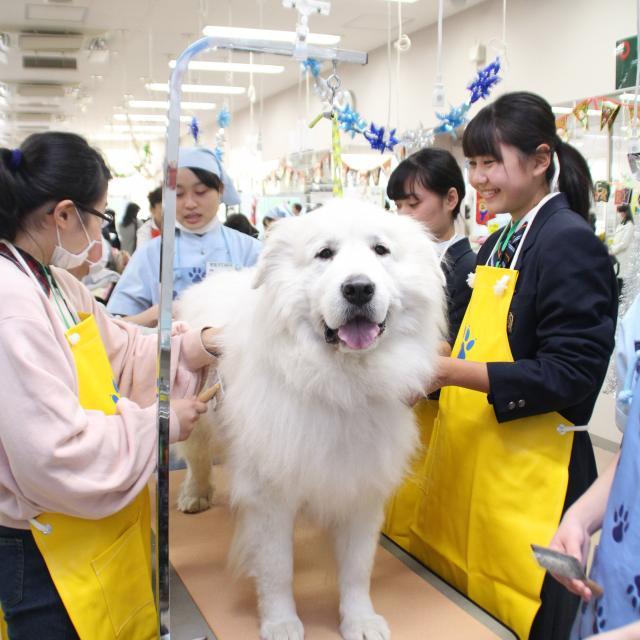 ヤマザキ動物看護大学 オープンキャンパス 20193