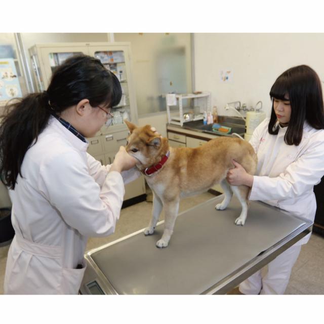 愛知ペット専門学校 動物看護体験4