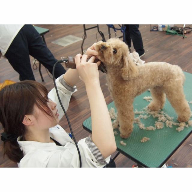 愛知ペット専門学校 トリマーのお仕事体験4