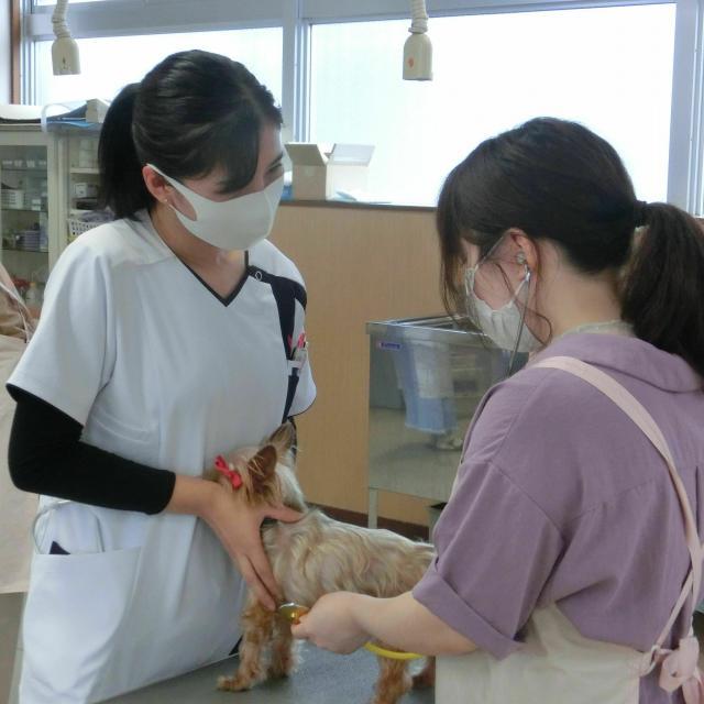 京都動物専門学校 動物看護&トリミング体験2
