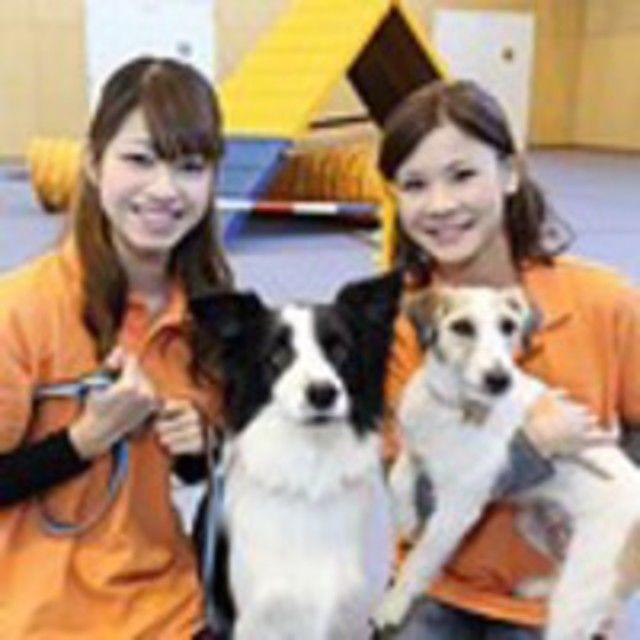 神戸動植物環境専門学校 【B:ドッグトレーナー★体験】おすわり!まて!障害物競争も♪2