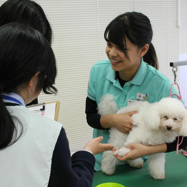 国際動物専門学校 全学科体験2