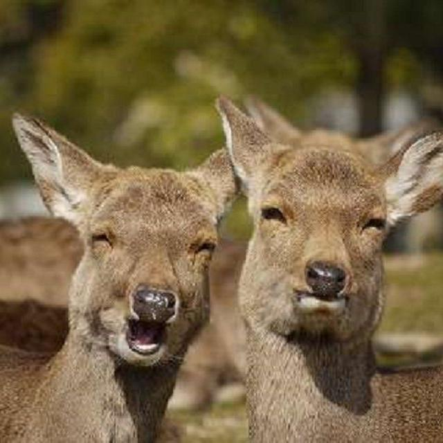 九州動物学院 第6回 動物園の方の話しを聞こう!2