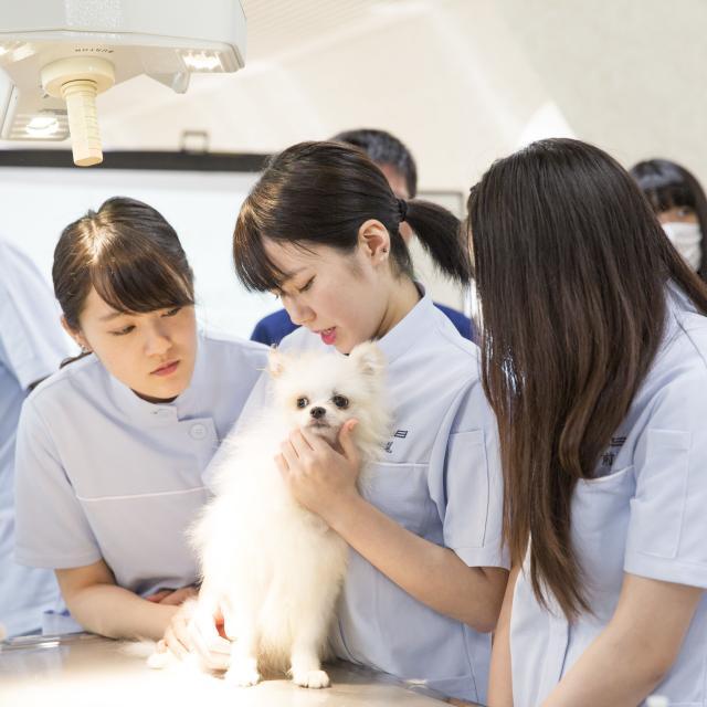北海道どうぶつ・医療専門学校 ☆動物看護専攻☆ 動物病院のお仕事を体験してみよう!1