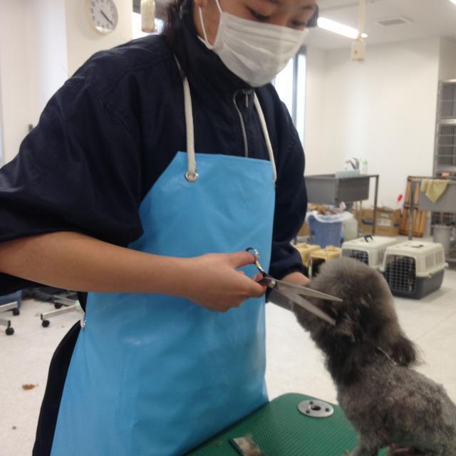 九州動物学院 第13回 トリマーの仕事に挑戦!~道具を使ってみよう~4