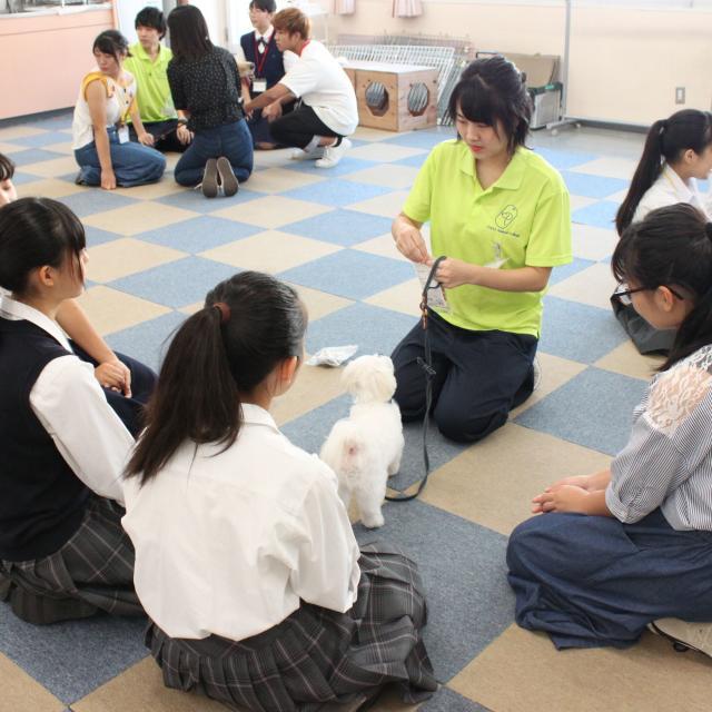 中央動物専門学校 新3年生対象体験入学2