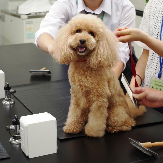 湘央生命科学技術専門学校 カワイイわんこがお出迎え!動物看護師☆オープンキャンパス1