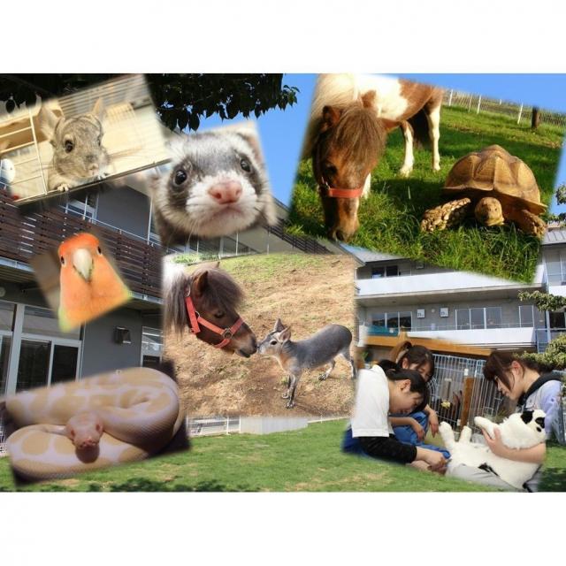 専門学校ちば愛犬動物フラワー学園 8/7(火)コース別オープンキャンパス3