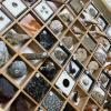 TCA東京ECO動物海洋専門学校 生きた化石の飼育展示と古代生物の魅力を学ぶ