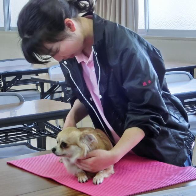 京都動物専門学校 ワンちゃんもリラックス~♪ドッグマッサージ&トリミング体験2