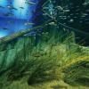 TCA東京ECO動物海洋専門学校 水族館館長直伝!魚類飼育・展示の必要性