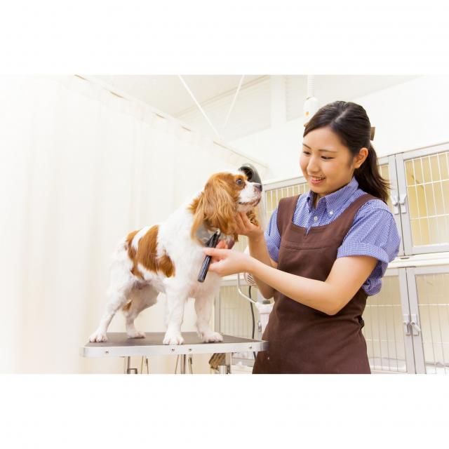 WaNオープンキャンパス★動物業界を体験♪