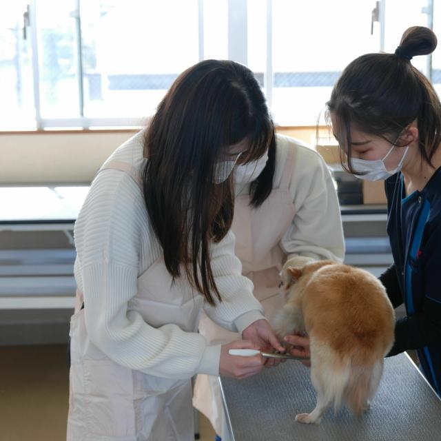 京都動物専門学校 動物看護&トリミング体験3