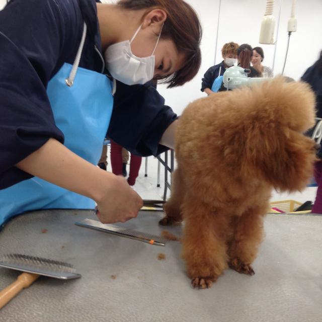 九州動物学院 第13回 トリマーの仕事に挑戦!~道具を使ってみよう~3