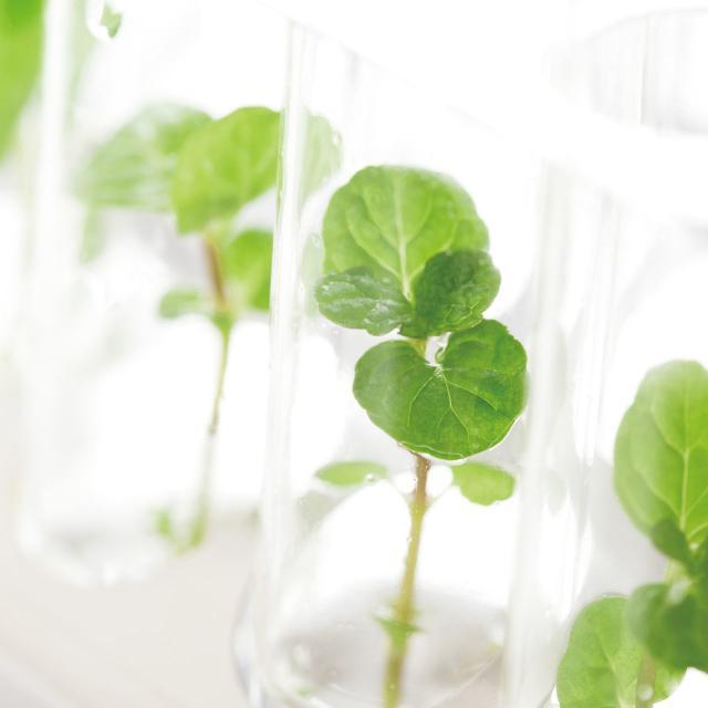 東京バイオテクノロジー専門学校 【植物バイオコース】オープンキャンパス:バイオのコース体験1