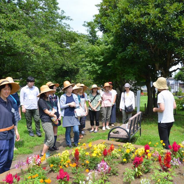 日本ガーデンデザイン専門学校 花壇のお手入れのコツ1