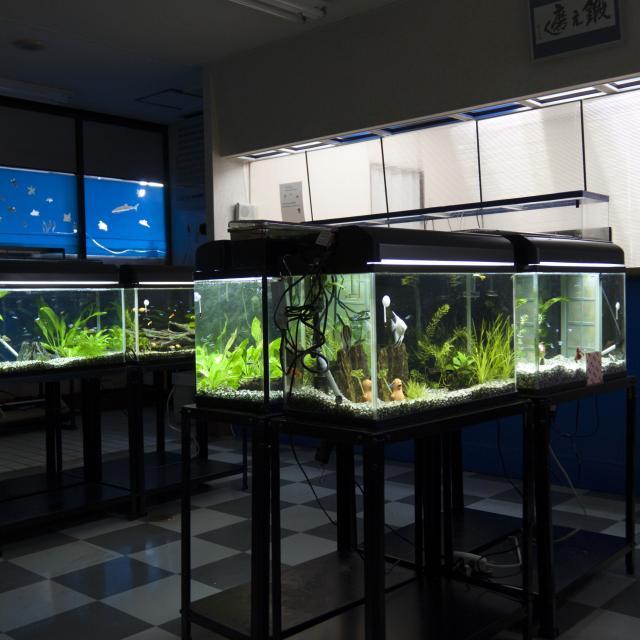 YIC京都ペット総合専門学校 水槽を好きなようにレイアウトしてみよう1