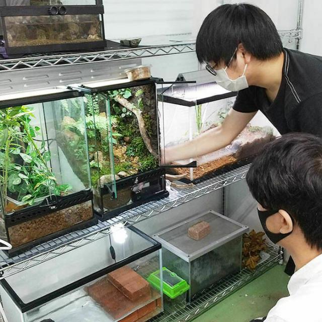 日本自然環境専門学校 飼育室の生き物を観察しよう1